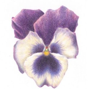 Botanical Drawing - Delights of May - MOVED FROM 2020