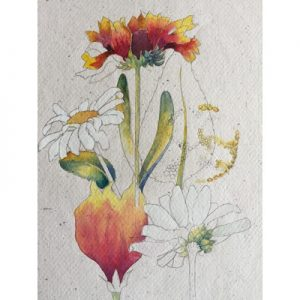 Wonderful Ways with Watercolour for Botanical Subjects (6 x 3 hour afternoon sessions) MOVED FROM 2020